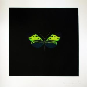 Green Butterfly (from The souls on Jacob's ladder take their flight)