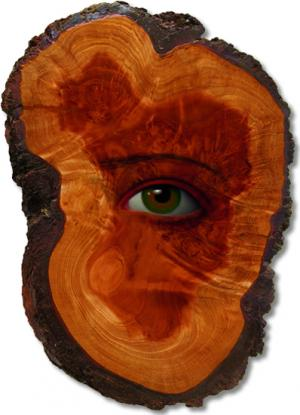 Redwood Spirit