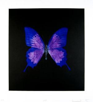 Unique Puprle Butterfly