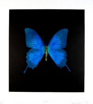 Unique Teal Butterfly