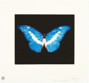 Damien Hirst, To Begin